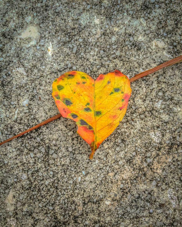 Healing the Heart - Jack Kornfield