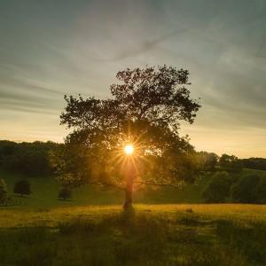 rp_tree-sun-300x300.jpg