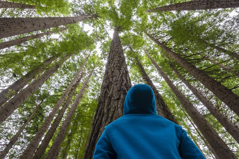 Heart Wisdom – Ep. 69 – A Foundation of Resolve