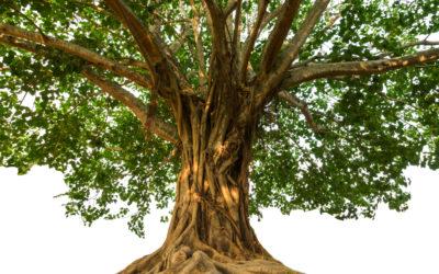 Family Peace: A Reconciliation Meditation