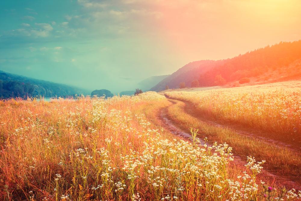 The Bodhisattva's Path