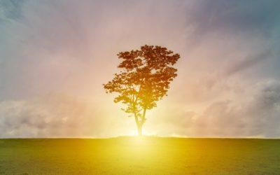 Video: Compassion & Equanimity Meditation
